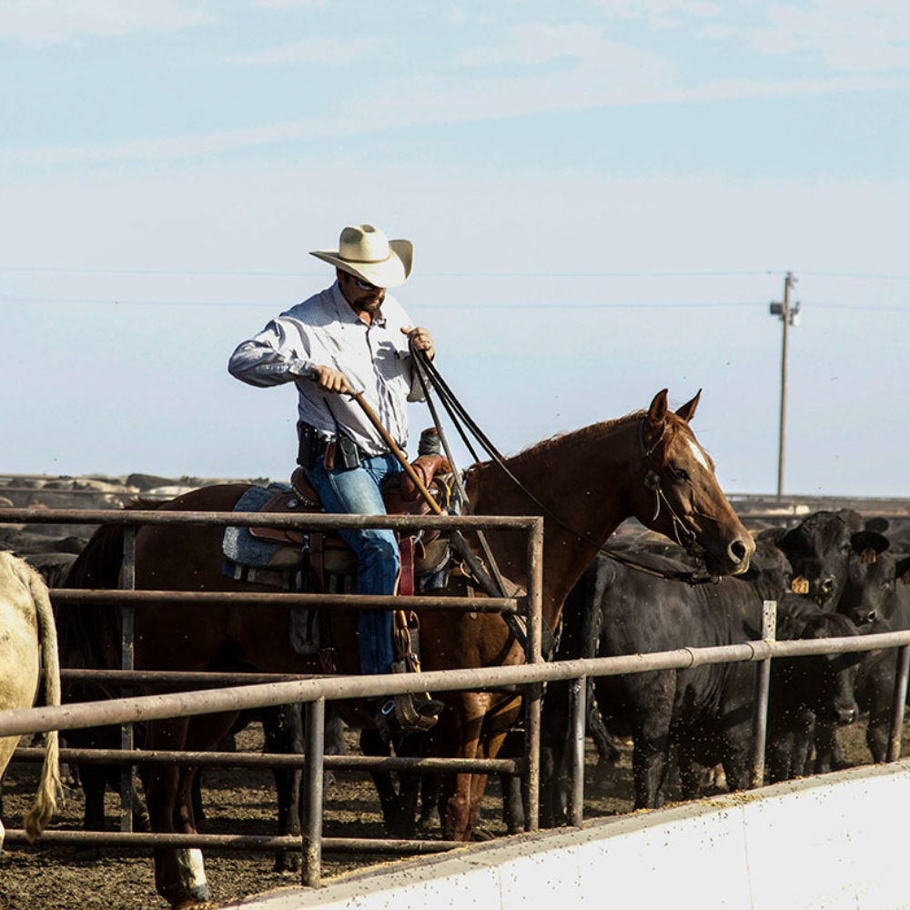Friona Cowboy on Texas Feedyard